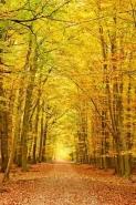 Fototapety NATURA drzewa 10455 mini
