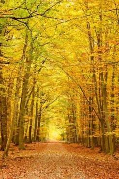 Fototapety NATURA drzewa 10455