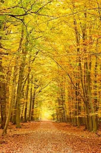 Fototapety NATURA drzewa 10455-big
