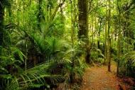 Fototapety NATURA drzewa 10456 mini