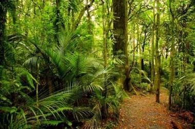 Fototapety NATURA drzewa 10456