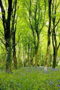 Fototapety NATURA drzewa 10457