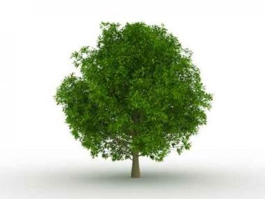 Fototapety NATURA drzewa 10458