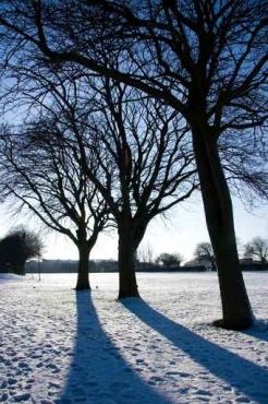 Fototapety NATURA drzewa 10459
