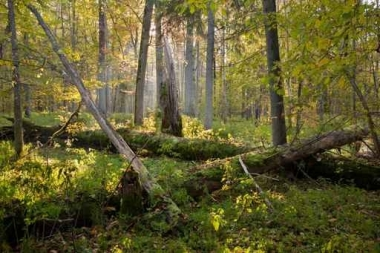 Fototapety NATURA drzewa 10460