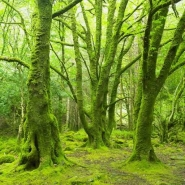 Fototapety NATURA drzewa 10463 mini
