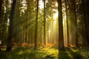 Fototapety NATURA drzewa 10465