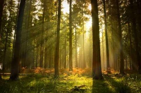 Fototapety NATURA drzewa 10465-big