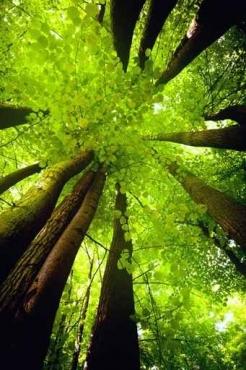 Fototapety NATURA drzewa 10466