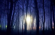 Fototapety NATURA drzewa 10467 mini