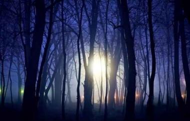 Fototapety NATURA drzewa 10467