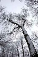 Fototapety NATURA drzewa 10468 mini