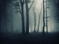 Fototapety NATURA drzewa 10471 mini