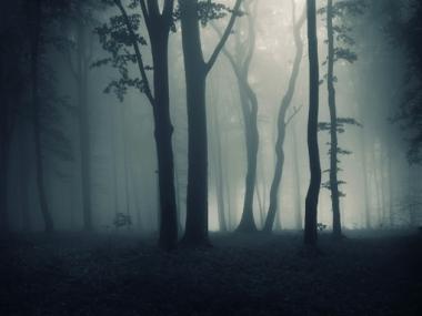 Fototapety NATURA drzewa 10471