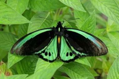 Fototapety KOLORY szmaragd emerald 11893
