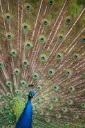 Fototapety KOLORY szmaragd emerald 11927 mini