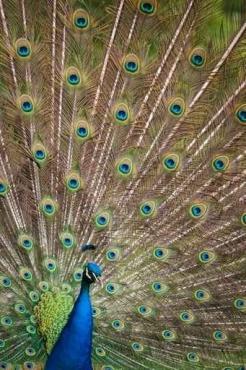Fototapety KOLORY szmaragd emerald 11927