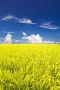 Fototapety KOLORY żółty yellow 11933 mini