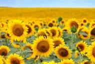 Fototapety KOLORY żółty yellow 11939 mini