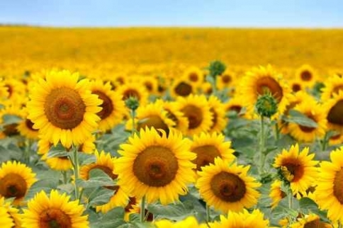 Fototapety KOLORY żółty yellow 11939-big