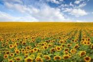 Fototapety KOLORY żółty yellow 11940 mini