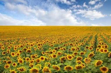 Fototapety KOLORY żółty yellow 11940