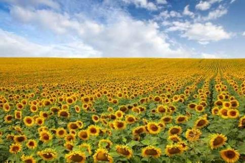 Fototapety KOLORY żółty yellow 11940-big