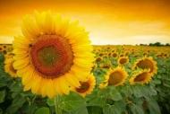 Fototapety KOLORY żółty yellow 11941 mini