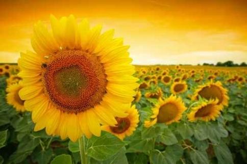 Fototapety KOLORY żółty yellow 11941-big