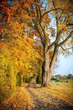 Fototapety KOLORY żółty yellow 11947