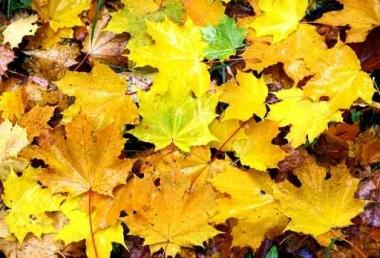 Fototapety KOLORY żółty yellow 11950