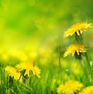 Fototapety KOLORY żółty yellow 11954 mini