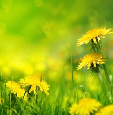 Fototapety KOLORY żółty yellow 11954