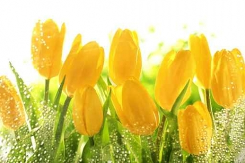 Fototapety KOLORY żółty yellow 11955-big
