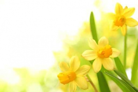 Fototapety KOLORY żółty yellow 11956-big