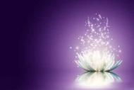 Fototapety KOLORY fiolet 12141 mini