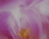 Fototapety KOLORY fiolet 12184 mini