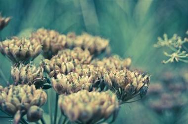Fototapety FOTOTAPETY DO SYPIALNI do sypialni 12655