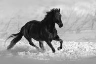 Fototapety FOTOTAPETY CZARNO BIAŁE Fototapety czarno białe 15098 mini