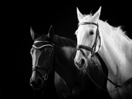 Fototapety FOTOTAPETY CZARNO BIAŁE Fototapety czarno białe 15100 mini