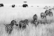Fototapety FOTOTAPETY CZARNO BIAŁE Fototapety czarno białe 15149 mini
