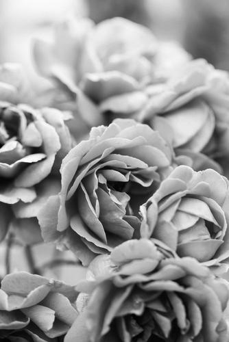 Fototapety FOTOTAPETY CZARNO BIAŁE Fototapety czarno białe 15315-big