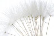 Fototapety FOTOTAPETY GLAMOUR fototapety glamour 17459 mini