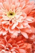 Fototapety FOTOTAPETY GLAMOUR fototapety glamour 17474 mini