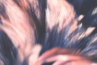 Fototapety FOTOTAPETY GLAMOUR fototapety glamour 18122 mini