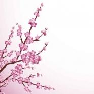 Fototapety JAPONIA japonia 2046 mini