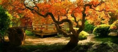 Fototapety JAPONIA japonia 2144