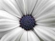 Fototapety KWIATY białe 2252 mini