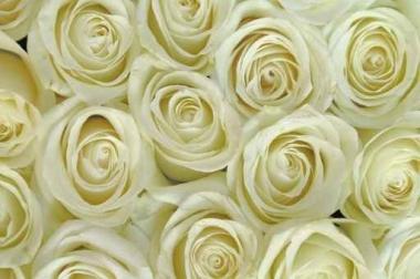 Fototapety KWIATY białe 2257