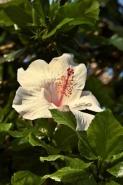 Fototapety KWIATY białe 2259 mini